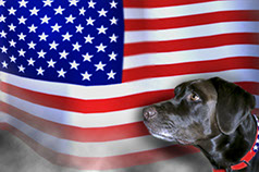 Image of service dog in front of flag